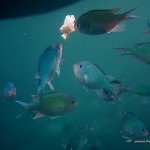 Fishes in action