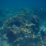 Coral Reefs and Sea Urchins at Skeleton Wreck