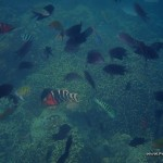Coral Reefs and Fishes in Siete Pecados