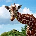 Calauit Safari Park: A Taste of Africa in Busuanga, Palawan