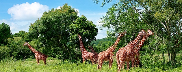 Calauit Safari Park: A Taste of Africa in Busuanga, Palawan