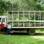 Calauit Safari Park Tour Truck