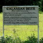 Calamian Deer Signage - Calauit Safari Park