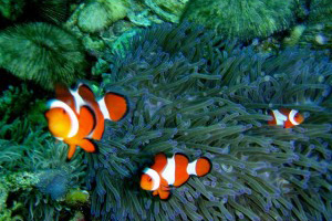 Diving at Marissa Reef in Samal Island, Davao